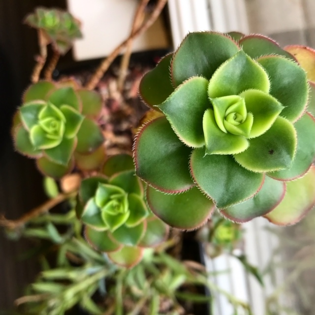 Picture of green succulent plant
